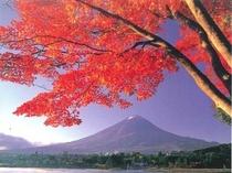 紅葉の富士