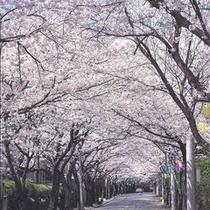 伊豆高原桜のトンネル