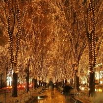 仙台の冬の風物詩☆ケアキ並木が幻想的な光に包まれる【SENDAI光のページェント】
