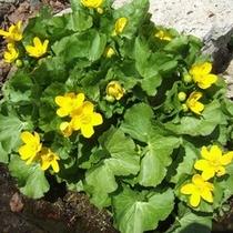 【マウレの庭】春