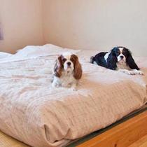 【お部屋一例】畳敷ツインルーム