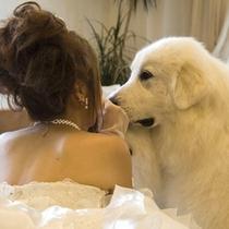 【フォトウェディング】愛犬と一生に一度の思い出作り。
