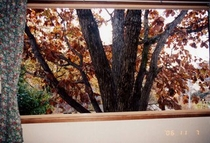お部屋の窓から/晩秋