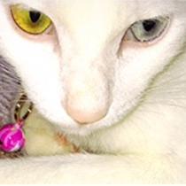 信夫温泉に迷い込んだネコちゃん