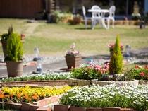 広いお庭にはたくさんのお花がお出迎え*゜