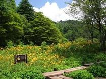 【近隣施設】六甲高山植物園