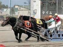 【ばんえい競馬】迫力のあるレースが見れます