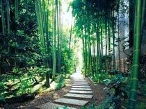 竹の道(神谷町駅方面から別館ロビーへ)