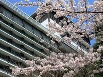 別館外観(春・桜)