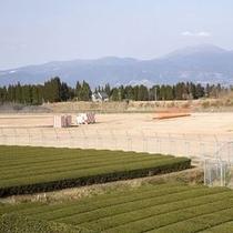 茶畑・霧島連山