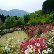 花月園つつじ2014