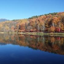 *【周辺/紅葉】絵葉書のような湖面に映える紅葉は、まさに絶景です。