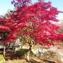 *【周辺/紅葉】施設やお部屋からも紅葉をご覧いただけます。