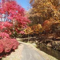 *【周辺/紅葉】四季折々の風景をご覧になりながら、周辺散策が楽しめます。