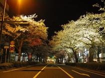 日立市・夜桜イルミネーション