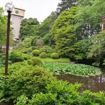 *日本庭園/約4500坪に彩られる木々や草花。四季ごとに違う表情を見せる景観に魅了されます。