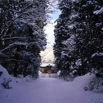 *冬の神社参道を歩くのも気持ちいいですよ。