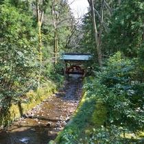 *川のせせらぎと鮮やかな緑に癒されます。
