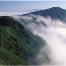 ■白神山地