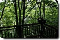 広葉樹の杜の朝