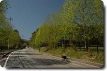 新緑の牧場通り