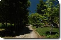 新緑の前の道