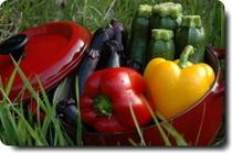 お野菜が美しい