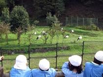 コウノトリの郷公園の一例 豊岡市はコウノトリ復活のパイオニア。 富士見屋から車で約20分