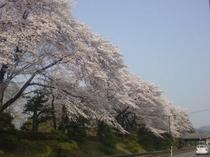 ホテル正面(桜並木)