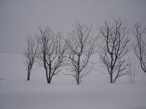 【冬】ある暴風雪の日