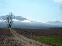 【春】朝の前富良野岳とポプラの樹