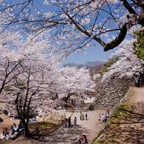 小諸懐古園の桜