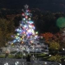 ガラスの森美術館/冬・クリスマスツリー