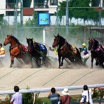 世界で唯一のばんえい競馬。スピードだけではなく、馬の力と持久力そして騎手のテクニックが問われます。