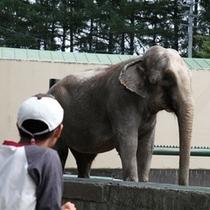 帯広動物園は道内で唯一象に出会える動物園。インド象のナナが出迎えてくれます。