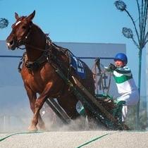 サラブレッドのような平地馬よりもがっしりと大きいばん馬は間近で見ると迫力満点です。