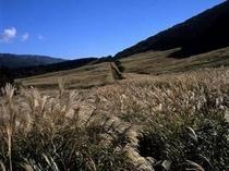 *台ケ岳のすすき草原