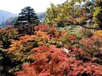 *強羅公園の紅葉