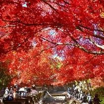 秋には大山にある紅葉の並木が見れます。