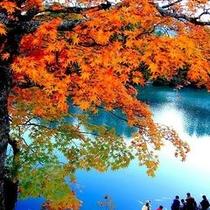 【秋】もみじと毘沙門沼