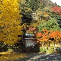 【秋の景色】大自然の中で季節の変わり目を感じて頂きたいです。
