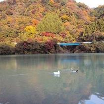 【丹沢湖】秋の紅葉と丹沢湖はパワースポットだと自負しております。
