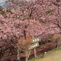 【春の景色】大自然の中にある桜を見て頂き、気持ちをリフレッシュして頂きたいです。