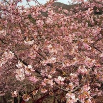 【春の景色】春の時期もおすすめです。見応えある桜をご覧ください。