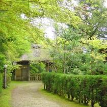 【景色】新緑の季節には散策が気持ちいいです。