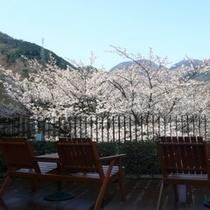 ■オープンテラス桜
