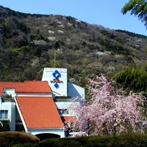 ■枝垂桜全景
