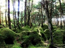 原生林の苔の森