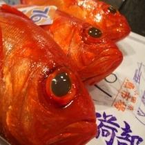 近海物生金目鯛