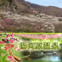 湯河原特集 梅の宴